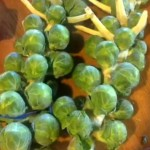 Fresh Brussel Sprouts on the Stalk